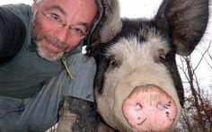 Schwein mit Bauer  Rancher Ollie 'n big Berkshire sow share a moment...  https://www.facebook.com/NorthWoodsRanch