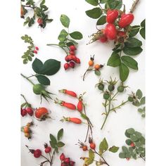 All rose hips great and small.