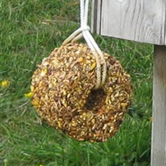 Chicken Hanging Treats. I think we could make these for days they're stuck in the coop.