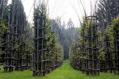 giuliano-mauri-arbres-cathedral-cattedrale-vegetale-foret-10