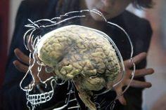 Depois de resultados em cobaias, neurocientista está testando a descoberta num grupo de pacientes com lesões medulares crônicas