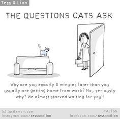 Cat Questions | Last