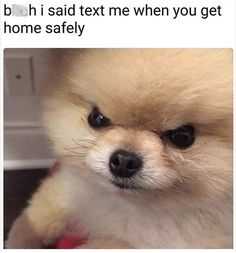 nice Dog Memes That Are Too Freaking Hilarious Pictures) Funny Animal Photos, Funny Animal Memes, Dog Memes, Cute Funny Animals, Cute Baby Animals, Funny Memes, Pet Photos, Funny Videos, Cute Puppies