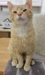 Danny is an adoptable Tabby Cat in Alexandria, VA. You can fill out an adoption application online on our official website. I AM IN FOSTER CARE! I am Danny (orange tabby boy) who arrived here with my ...