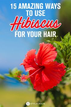 [ Hair Care Products : 15 Amazing Ways To Use Hibiscus For Your Hair. Hibiscus is one of the most renowned herbs used for hair growth. It has gained Ayurvedic Hair Oil, Hair Regrowth, Hair Follicles, Diy Hair Care, Hair Remedies For Growth, Healthy Hair Tips, Oily Hair, Hair Growth Oil, Prevent Hair Loss
