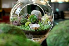 Alapash store on N. Damen makes custom terrariums. | Chicago ...