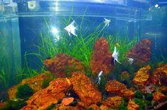 #SeaWorld #Jakarta #Indonesia #Fish
