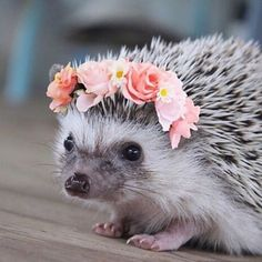 Welcome To My Confusing Land Of Simple Pleasures. — Baby hedgehog with a flower wreath. Cute Creatures, Beautiful Creatures, Animals Beautiful, Hedgehog Pet, Cute Hedgehog, Hedgehog Facts, Cute Baby Animals, Animals And Pets, Funny Animals