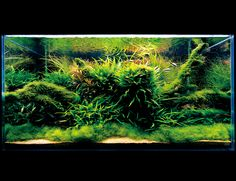 Nature aquarium by ADA. The combination of moss covered driftwood with ferns growing on it gives an impression of time passing by. The cosmetic sand in front keeps the aquascape clean and draws the viewer's attention to the driftwood, the focal point in this setting.
