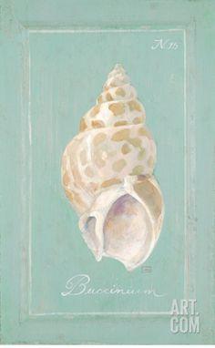 Spiral Shell Art Print by Hardenbrook  Studio at Art.com