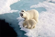 Stop Shell's Arctic drilling plans-petition attached via NRDC