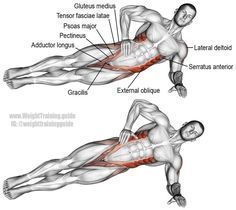 Lying side hip raise. An isolation push exercise that works many muscles! Muscles worked: Internal and External Obliques, Gluteus Medius, Gluteus Minimus, Tensor Fasciae Latae, Quadratus Lumborum, Psoas Major, Iliocastalis Lumborum, Iliocastalis Thoracis, Adductor Magnus, Adductor Brevis, Adductor Longus, Pectineus, Gracilis, Gluteus Maximus, Lateral Deltoid, Supraspinatus, Middle and Lower Trapezii, and Serratus Anterior. See website for benefits of this exercise.