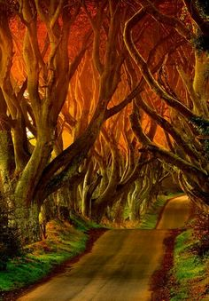 The Dark Hedges Reviews - County Antrim, Northern Ireland