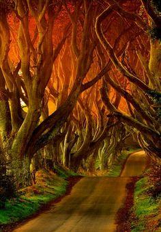 The Dark Hedges Reviews - County Antrim, Northern Ireland
