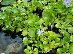 Turtle Pond on Pinterest Ponds, Turtle Pond and Plants