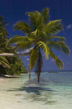 Kuramathi Island, Maldives