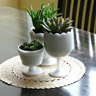 Succulents in Thrifted Milk Glass#/576708/succulents-in-thrifted-milk-glass?&_suid=1362232973668012061884229686864