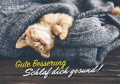 Find Cute Little Ginger Kitten Sleeping Soft stock images in HD and millions of other royalty-free stock photos, illustrations and vectors in the Shutterstock collection. Cute Kittens, Cats And Kittens, Crazy Cat Lady, Crazy Cats, Stuffed Animals, Video Chat, Ginger Kitten, Ginger Cats, Image Chat