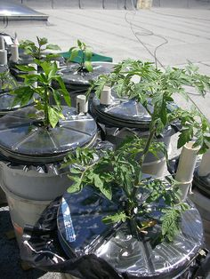 How to make self watering earth buckets for growing vegetables.  http://www.seattleoil.com/Flyers/Earthbox.pdf