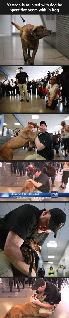 Veteran is reunited with the military working dog he had for 5 years. Now retired and spending its life as his owners Service Dog.