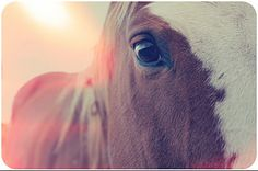 LOVE horses. I would love to have one! So beautiful.