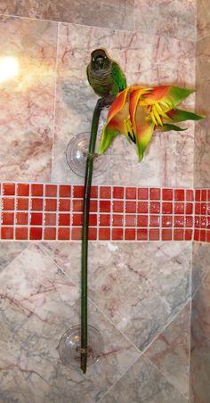 DIY Shower Perch for your bird... pet bird diy ideas