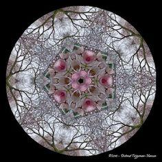 cirkels / circles by dietmut, via Flickr