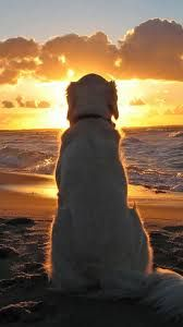 Image result for cool sunset
