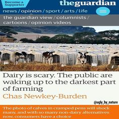 Upsetting as the story is what happens elsewhere in the dairy industry amounts to systematic cruelty. In reality the daily practices of most dairy farms are more distressing than those of meat production. A mother cow only produces milk when she gets pregnant. So starting from the age of 15 months she will usually be artificially inseminated. Farmers mechanically draw semen from a bull and then force the female cow into a narrow trap known as a cattle crush where they will brutally…