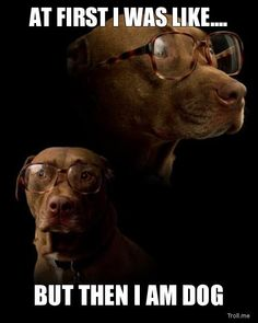 At first I was like... But then I am dog.