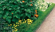 In almost every beautiful garden i visit, there is at least one immaculately kept wall of foliage and in my mind's eye, my own garden will one day be Hedges Landscaping, Plants, Beautiful Gardens, Windbreak Trees, Diy Garden, Small Space Gardening, Garden Design, Outdoor Pergola, Video Garden