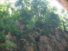Lied: Verdronken vlinder van Boudewijn de Groot Foto's van de rivier en bossen zijn genomen door mij in Slovenië, in de omgeving van Bled. Een foto is gemaak...