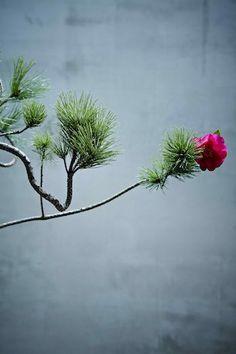 Ikebana「cramped punk by Azuma Makoto, Japan Flowers Nature, Beautiful Flowers, Azuma Makoto, Amazing Photography, Nature Photography, Flower Artists, Garden Terrarium, Japanese Flowers, Ikebana