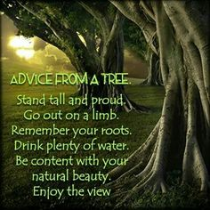 Advice from a tree...