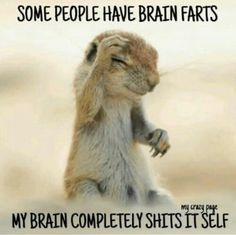 List of 6 best Funny Humor Sarcasm in week 9 Haha Funny, Funny Jokes, Hilarious, Funny Stuff, Funny Animal Memes, Cute Funny Animals, Funny Animal Pictures, Word Pictures, Funny Memes