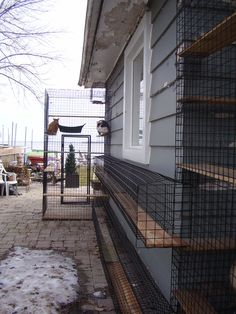 Catio, Habitats, Photo Galleries, Stairs, Pets, Gallery, Outdoor, Gardens, Cats