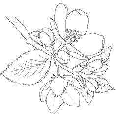 My first digital stamp! FREE !!! sketch for watercoloring!