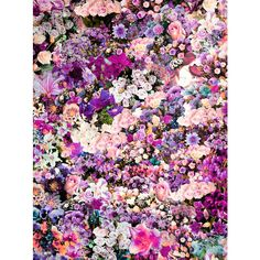 tarulex: fabuloux: wowza more like this here ❤ liked on Polyvore featuring backgrounds, pictures, photos, flowers, fillers, patterns, text, texture, quotes and saying