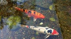 The Benefits of Giving Your Children Pet Fish