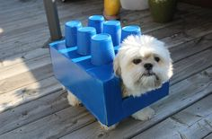 Excitement is building for this DIY dog Halloween Costume. Turn your pooch into a Lego brick – and it all starts with an empty shoebox.