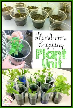 This is a complete life science unit on plants! It focuses on the needs of plant… This is a complete Science Lesson Plans, Science Lessons, Life Science, Science Biology, Primary Science, Science Classroom, Plant Lessons, Second Grade Science, Plant Science