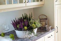 Ein Stilleben für die Küche aus Heidepflanzen, die mit Ziergurken und Zieräpfeln…