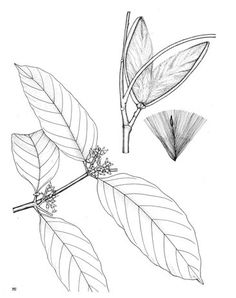 Pretarsal and preseptal portions of the orbicularis oculi