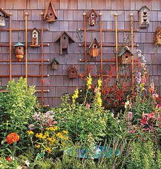 A collection of birdhouses transforms a wall of shingle siding into a fanciful focal point.    The fact that a birdhouse is normally nestled among plants in the garden makes this grouping all the more appropriate for displaying outdoors.