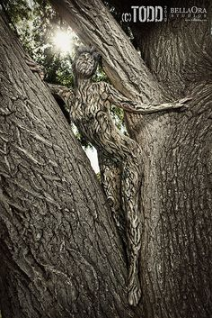 Druids Trees:  #Tree #Spirit.