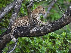 Flora and Fauna of Chhattisgarh, India @ Sanctuariesindia.com