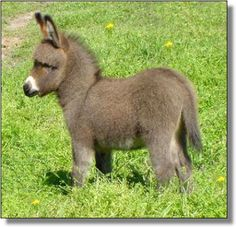 baby donkey...so cute