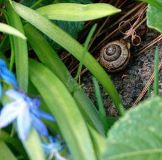 Kevätvieras takapihalla ©amayatar #pientalojapiha