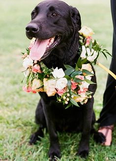 Happy black lab! Megan & William | Spring Wedding at Tuckahoe Plantation — Loverly Weddings