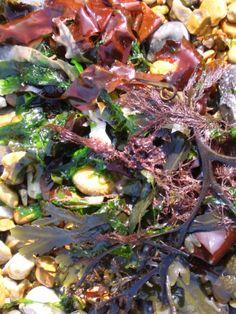 Seaweed. MIK photography